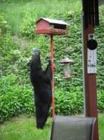Trail Advisory: Bears near Creighton